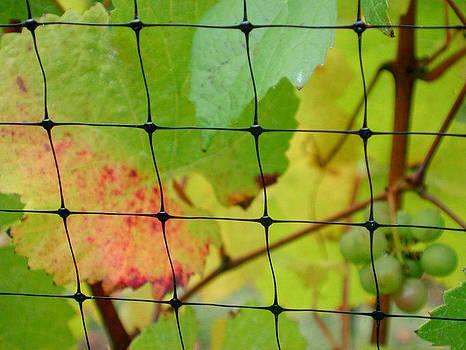 Vineyard netting by Mamie Gunning