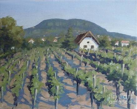 Vineyard of Badacsony by Viktoria K Majestic