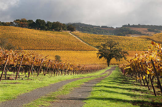 Vineyard Roads by Kent Sorensen