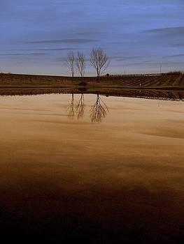 Vineyard by SW Johnson