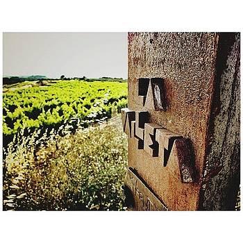 #vinsdeltros #vi #vino #vins #vinho by Joan Ramon Bada