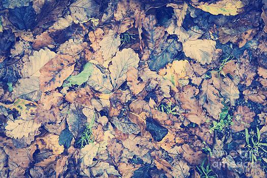Tim Hester - Vintage Autumn Leaves