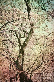 Vintage Blossoms by Sharon Kalstek-Coty