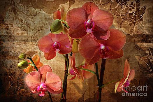 Vintage Burnt Orange Orchids by Judy Palkimas