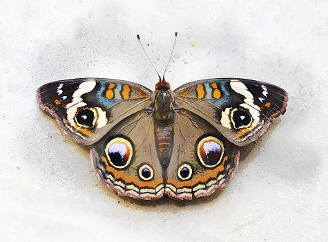 Vintage Butterfly by Jessica Snyder