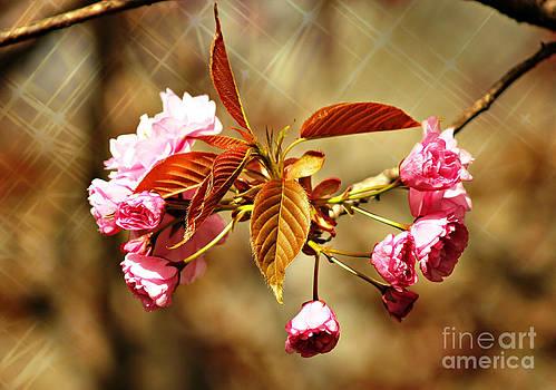 Vintage Cherry Blossoms by Judy Palkimas