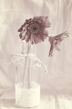 LHJB Photography - Vintage Gerbera