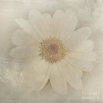Beverly Claire Kaiya - Vintage Painterly White Daisy