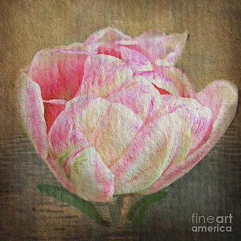 Vintage Paper Tulip by Judy Palkimas