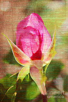 Vintage Pink Rose Bud by Judy Palkimas