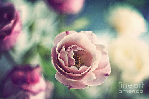Vintage Rose by Catherine MacBride