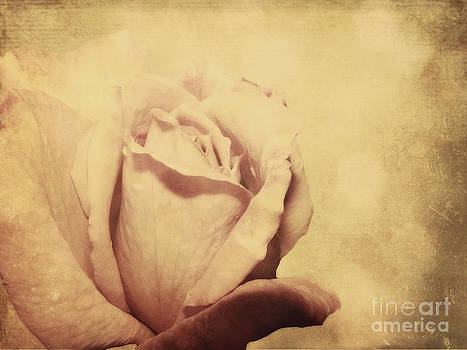 Emily Kelley - Vintage Rose