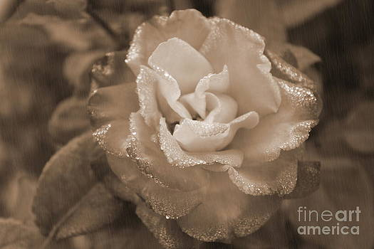 Vintage Rose by Julia Fine Art And Photography