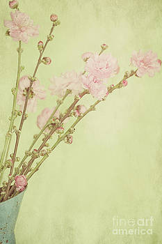 Vintage Spring Blossoms  by Susan Gary