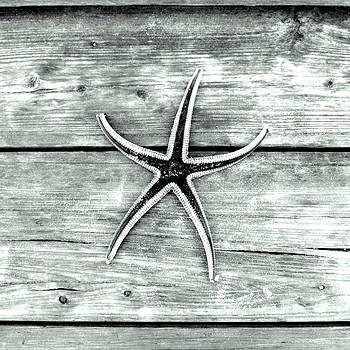 Starfish Series 2 of 5 by May Photography