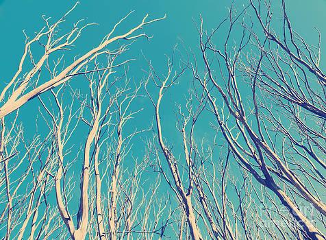 Tim Hester - Vintage Trees