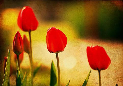 Vintage Tulip by Svetoslav Sokolov