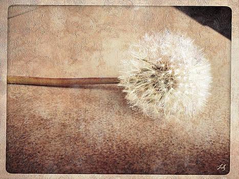 Linda Sannuti - Vintage Wish