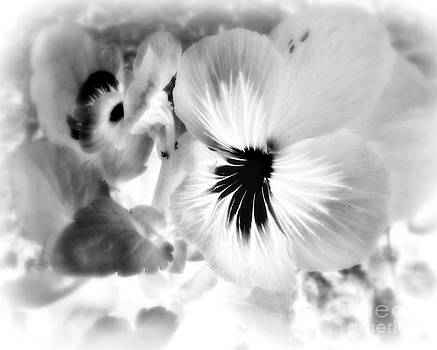 Viola Black And White by Ioanna Papanikolaou