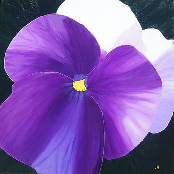 Viola Days by Jeannette Brown