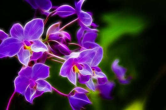 Ricky Barnard - Violet Blooms