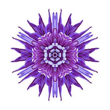 Violet Chrysanthemum IV Flower Mandala White by David J Bookbinder