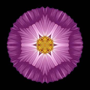 Violet Cosmos II Flower Mandala by David J Bookbinder