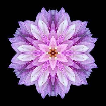 Violet Dahlia I Flower Mandala by David J Bookbinder