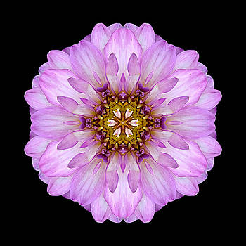 Violet Dahlia II Flower Mandala by David J Bookbinder