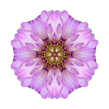 Violet Dahlia II Flower Mandala White by David J Bookbinder