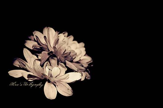 Violet Sepia by Alivia Houdek