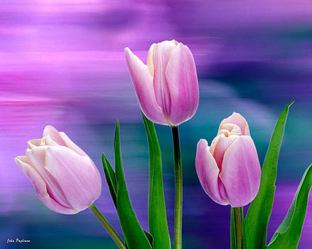 Violet Tulips by John Pagliuca