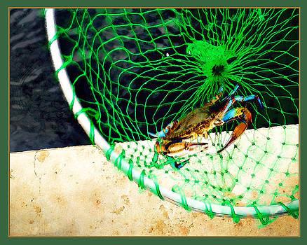 Margie Middleton - Virginia Blue Crab