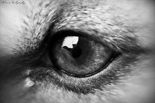 Vision Macro by Alivia Houdek