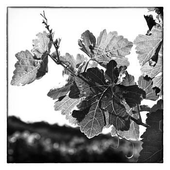 Nicole Neuefeind - Viticultura 9