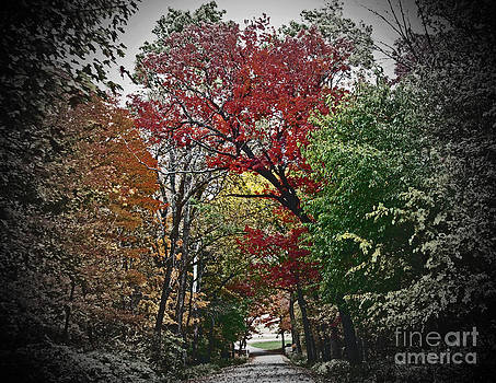 Minding My  Visions by Adri and Ray - Vivid Autumn Lane Tunnel Vision