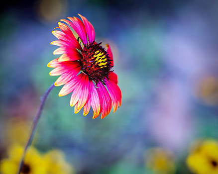 Vivid colors by Tammy Smith