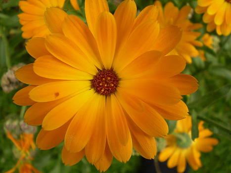 Vivid Orage Flower by Fabian Cardon
