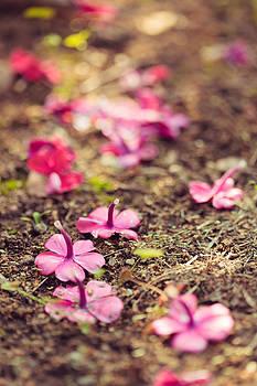 Vivid purple flowers on the ground by Juhani Viitanen