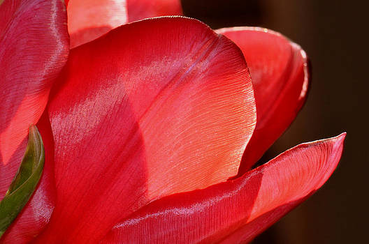 Vivid Red by Kelly D Photography