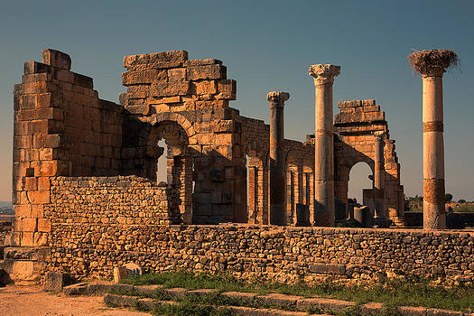 Volubilis by Phil Dyer