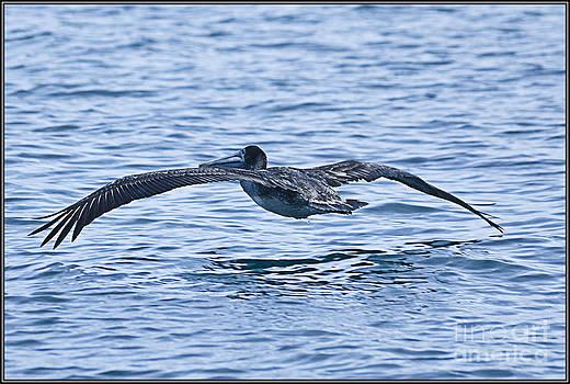 Agus Aldalur - vuelo sobre el mar