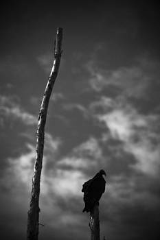 Vulture Portrait by Bradley R Youngberg