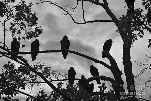 Dave Gordon - Vultures And Cloudy Sky BW