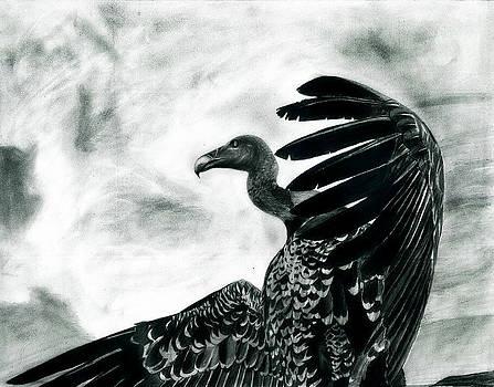Vulture's Pride by Raghav Ram