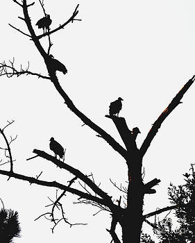 Vultures Waiting by Russell Christie