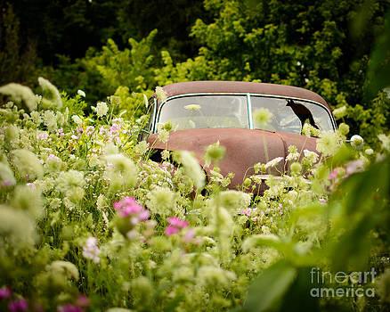 VW Beetle in a Garden by Mary Licanin