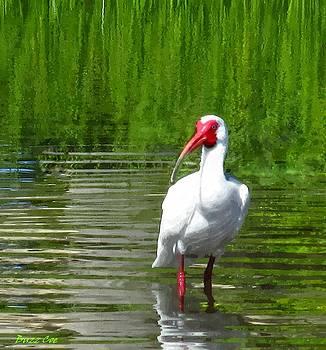 Buzz  Coe - Wading White Ibis VII