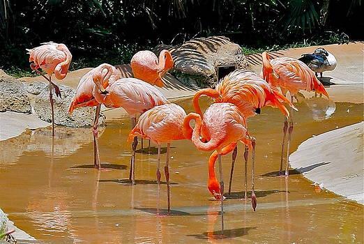 Waikiki Flamingos by Michele Myers
