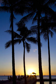 Waikiki Palms Sunset by Ashlee Meyer